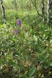 цветет пуща Стоковые Фотографии RF
