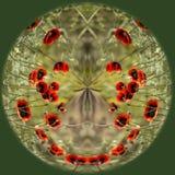 Цветет пленники в шаре Стоковое Изображение