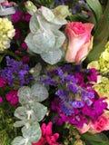 цветет радуга Стоковое Изображение RF