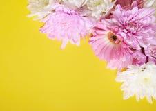 цветет древесина Стоковые Изображения RF