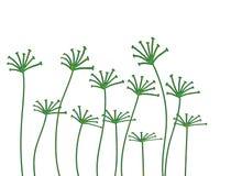 цветет ржавое Стоковое Изображение
