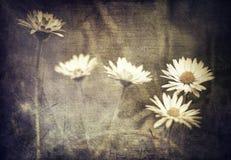 цветет сбор винограда Стоковые Изображения