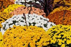 цветет сбывание Стоковые Фото