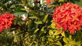 Цветет свежее зеленое зарево в вечере стоковая фотография rf