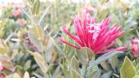 Цветет свежее зеленое зарево в вечере стоковое фото rf
