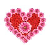 цветет сердце gerbera Стоковое Изображение RF