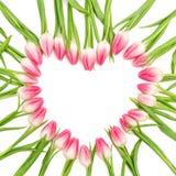 Цветет сердце розовые тюльпаны изолировали белую предпосылку Стоковые Фотографии RF