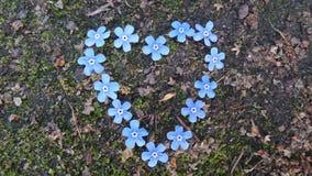 цветет сердце Стоковые Изображения RF