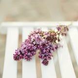 цветет сирень Стоковые Фото