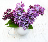 цветет сирень Стоковая Фотография RF