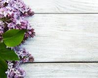 цветет сирень Стоковое Изображение