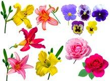 Цветет собрание лилия собрания цветет фиолетовые розы лилии Стоковое Изображение RF