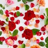 Цветет состав Красные розы на белой деревянной предпосылке Стоковые Фото