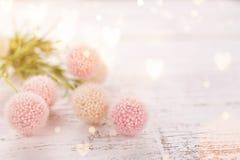 Цветет состав на ` s валентинки, ` s матери или ` s женщин день Розовые цветки на старой белой деревянной предпосылке стоковые изображения