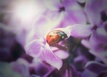 Цветет состав Стоковое Изображение RF