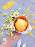 Цветет солнечные планы Стоковое Изображение