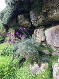 цветет стена Италии Тосканы Стоковая Фотография