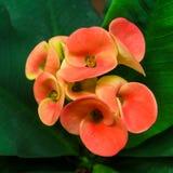 цветет славное Стоковая Фотография RF