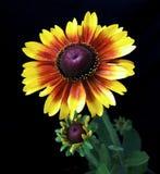 цветет славное Стоковое Изображение RF