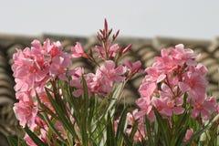 цветет тропическое Стоковые Изображения