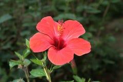 цветет тропическое Стоковое Изображение