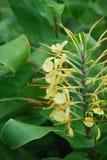 цветет тропическое Стоковое Фото