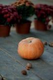 цветет тыквы Стоковая Фотография