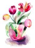 цветет тюльпаны Стоковое Изображение