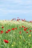 цветет лужок одичалый стоковая фотография rf