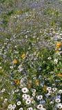 цветет лужок одичалый стоковое изображение
