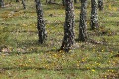 цветет лужок Стоковая Фотография
