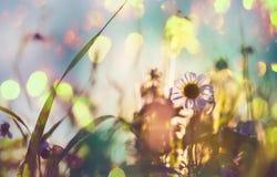 цветет лужок стоковые фотографии rf