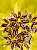 цветет уникально Стоковое Изображение