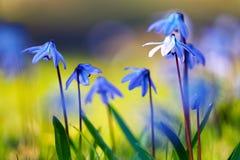 цветет унылое стоковое изображение rf