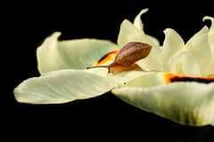 цветет улитка Стоковое фото RF