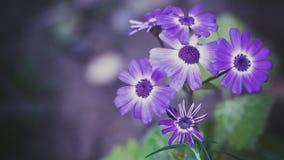 цветет фиолет Стоковое Фото