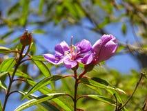 цветет фиолет стоковые изображения rf