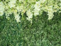 Цветет фон Стоковое фото RF