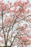 цветет хворостины весны капка стоковые фото