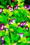 Цветет цветение Стоковое Изображение RF