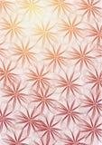 цветет цветистое Стоковая Фотография