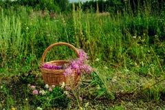 Цветет цветки чая вербы в корзине на траве стоковое фото rf