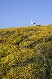 цветет чайка Стоковое фото RF