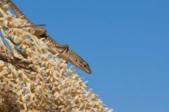 цветет ящерица Стоковая Фотография RF