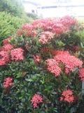 Цветет banch Стоковое Фото