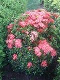 Цветет banch Стоковые Изображения RF