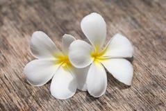 цветет frangipani тропический Стоковая Фотография