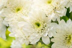 цветет funeral Стоковая Фотография RF