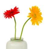 цветет gerbera 2 Стоковое фото RF