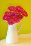 цветет gerbera Стоковое Изображение